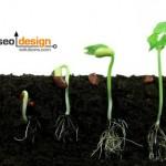 Organic SEO: Natural Search Engine Optimization