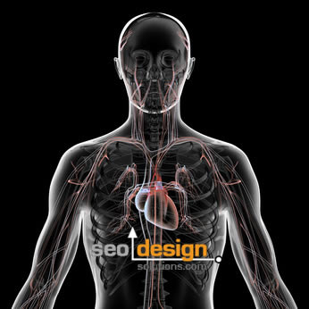 SEO Circulatory System
