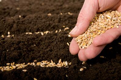 You Reap What you Sow with Organic SEO, by SEO Design Solutions.